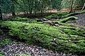 Epping Forest High Beach Essex England - rotting fallen tree trunk.jpg