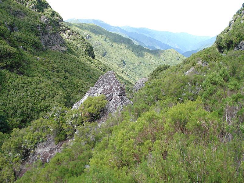 File:Erica arborea, Boomhei , Madeira (eiland) Madeira.jpg