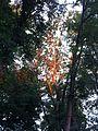 Erleuchteter Baum.JPG