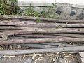 Ethiopie-Exploitation de l'eucalyptus (9).jpg