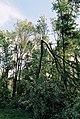 FEMA - 5116 - Photograph by Jocelyn Augustino taken on 09-25-2001 in Maryland.jpg