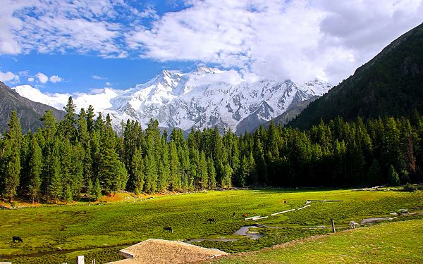 Fairy Meadows, Pakistan.jpg