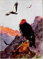 Falconry, the sport of kings (1920) (14772321553).jpg