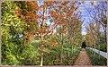 Fall Path (132678681).jpeg