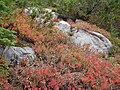 Fall colors (0aa386dd0a8349e5baef7498bb6b527a).JPG
