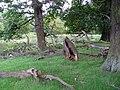 Fallow Deer in Dunham Park - geograph.org.uk - 503675.jpg