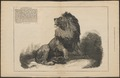 Felis leo - 1874 - Print - Iconographia Zoologica - Special Collections University of Amsterdam - UBA01 IZ22100059.tif