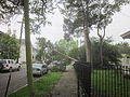 Fern St Storm Tree 1.JPG