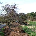 Field, Coppice and Lane, near Ashwood, Staffordshire - geograph.org.uk - 681078.jpg