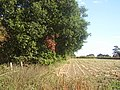Field along side a small wood - geograph.org.uk - 1525525.jpg