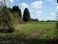 Field at Woodgates Farm - geograph.org.uk - 1221064.jpg