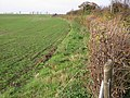 Field boundary with the Adisham Downs Road - geograph.org.uk - 620067.jpg
