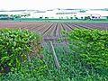 Field near Ardler - geograph.org.uk - 177148.jpg
