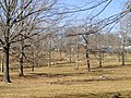 Fields - Cummings School of Veterinary Medicine - North Grafton, MA - DSC04511.JPG