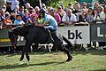Fiesta del Asturcón 2016 14.jpg