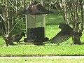 Finch Flying onto Bird Feeder.jpg
