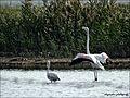 Flamingo pikrolimni lake.jpg