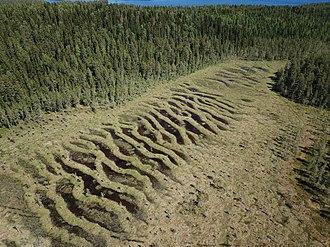 String bog - String bog in the middle of Sweden.