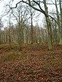 Flatroper's Wood - geograph.org.uk - 335239.jpg