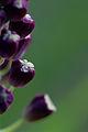 Fleur violette non identifiée.jpg