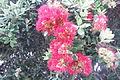 Fleurs de WA.jpg