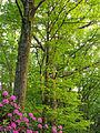 Flickr - Nicholas T - Graver Arboretum (1).jpg