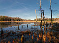 Flickr - Nicholas T - Rosecrans Bog Natural Area (1).jpg