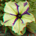Flickr - jimf0390 - JimF 06-05-12 0010a flowers at Latham.jpg