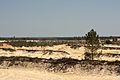 Flickr - nmorao - Areia, Estação da Somincor, 2009.04.01.jpg