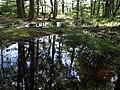 Flooded wood near Thorn Barrow - geograph.org.uk - 488317.jpg
