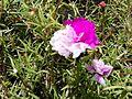 Flor de seda o Bella las once.jpg