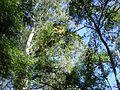 Flores no alto de galhos 3.jpg