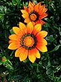Flower-center141346.jpg