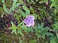 Flower (3734986869).jpg