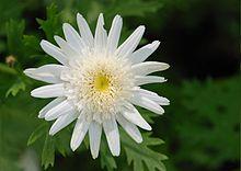 Flower April 2011-3.jpg