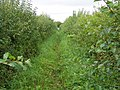 Footpath, Corton - geograph.org.uk - 1479292.jpg
