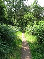 Footpath and Cycle track between Duncanwood Lodge and Kingstand Lodge - geograph.org.uk - 194524.jpg