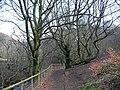 Footpath at Cwm Carn - geograph.org.uk - 688549.jpg