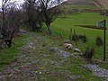 Footpath to Aran Fawddwy - geograph.org.uk - 716034.jpg
