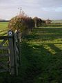 Footpath to Higham Ferrers - geograph.org.uk - 90901.jpg