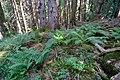 Forêt @ Le Grand-Bornand (50960584756).jpg