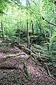 Forest @ Roc de Chère @ Talloires (34836757593).jpg