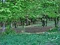 Forest - panoramio - paulnasca (9).jpg