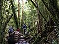 Forest Hike San Pedro.jpg