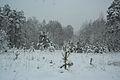 Forest near Ob river in Altai Region 44.JPG