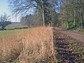 Forest track skirting Chase End Hill - geograph.org.uk - 1439144.jpg