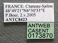 Formica rufibarbis casent0173870 label 1.jpg
