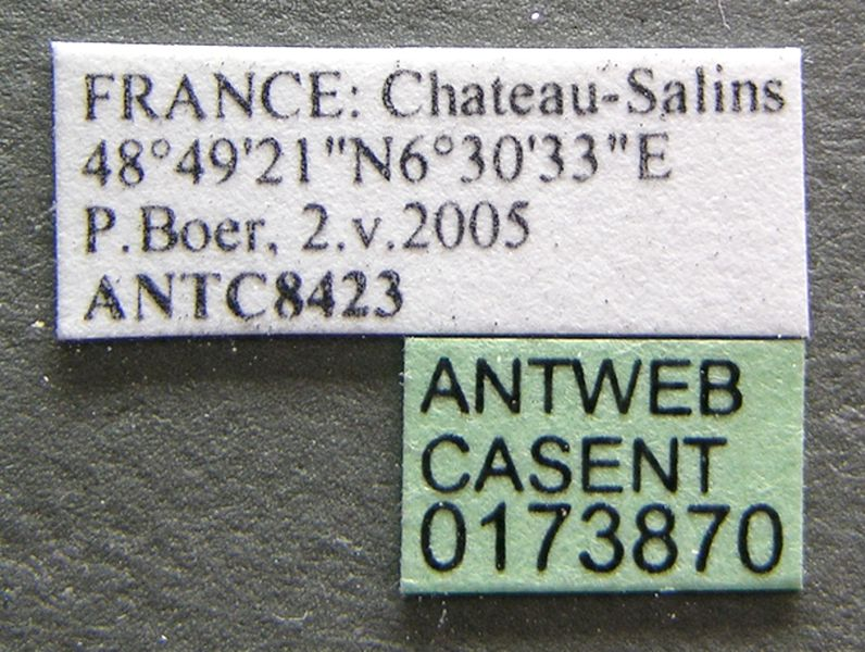 Label view of ant Formica rufibarbis specimen casent0173870.