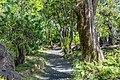Foster Garden Garden Path.jpg