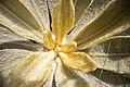 Frailejones de Subachoque.jpg